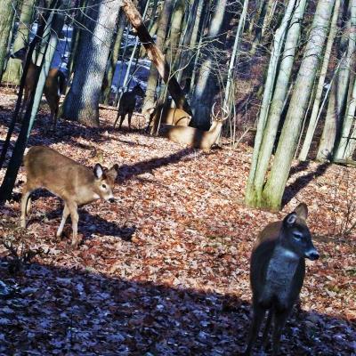 ImaginEco deer