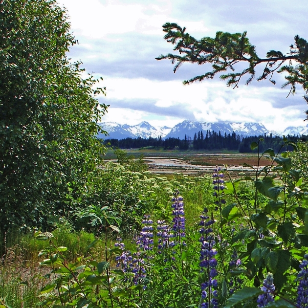 Alaska summer